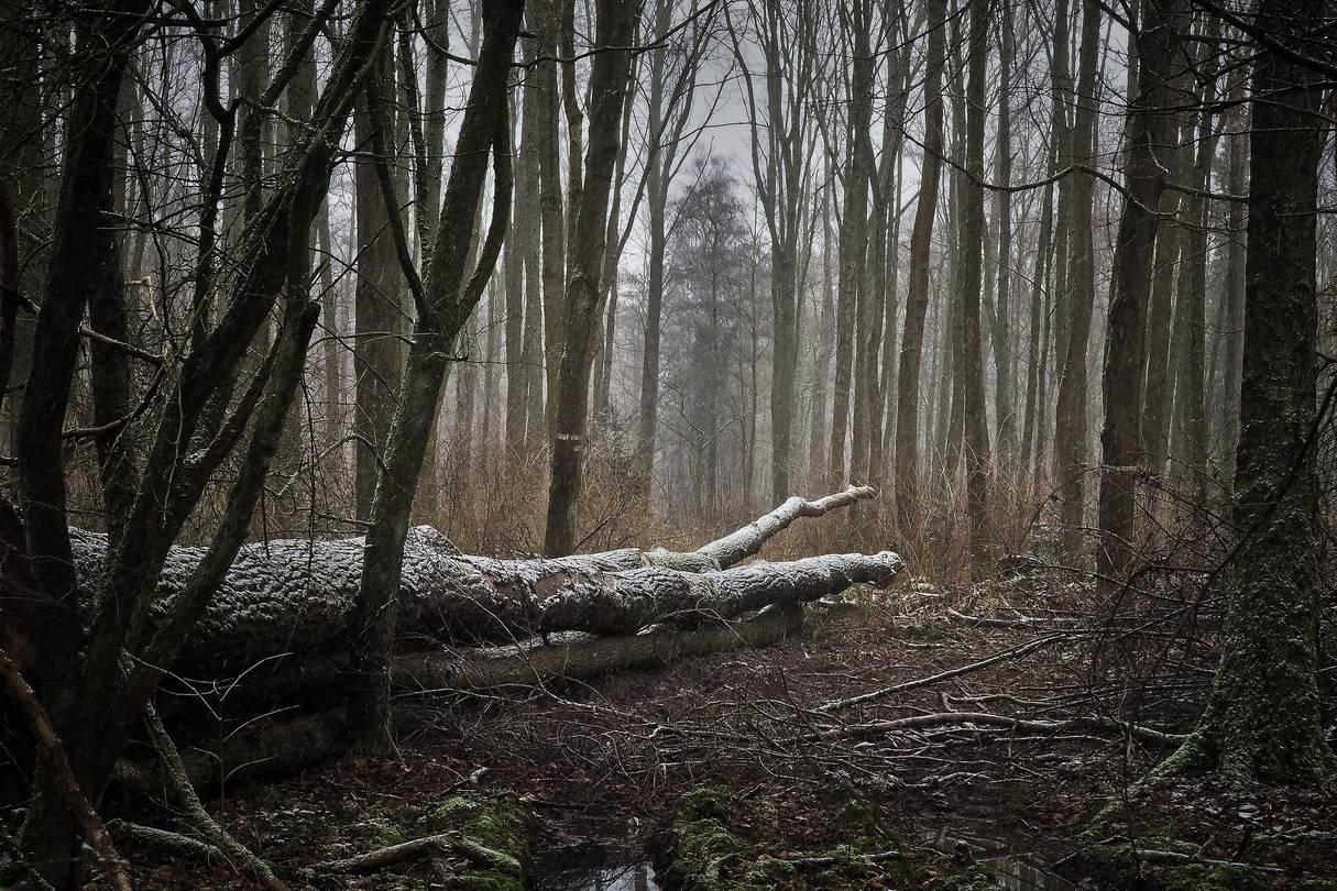 Waldstück ©Michael Gaida pixabay