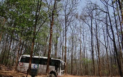 Wald Reisebuss