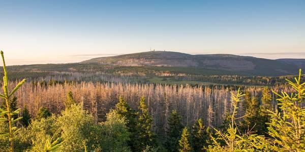 Harz Waldsterben Brocken Seaq68 pixabay ©Seaq68 pixabay