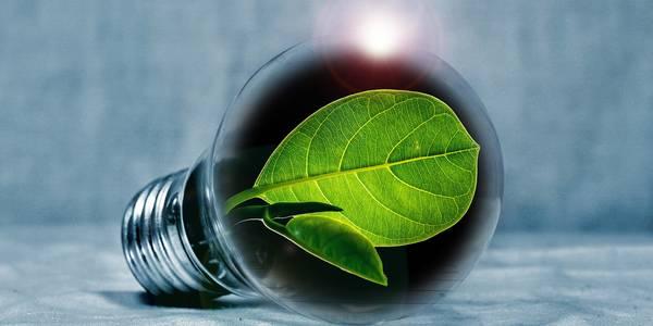 light bulb 2631864 1920 ©pixabay