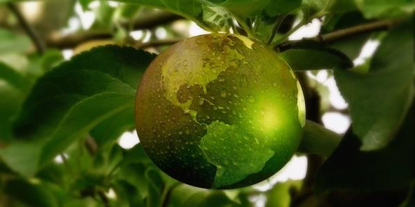 Weltkugel als Apfel