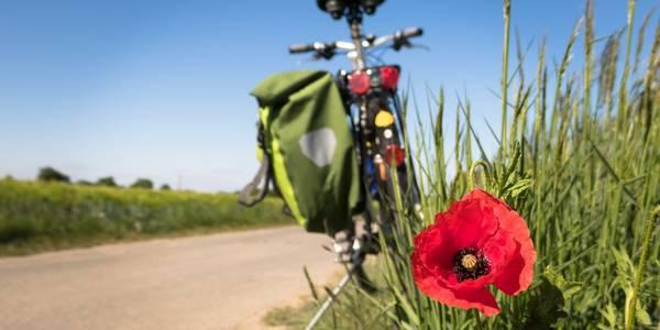 Fahrrad mit Tasche am Wegrand und Mohnblume