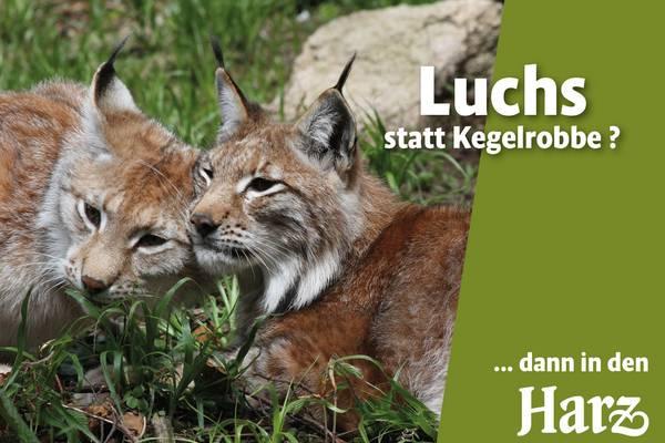 Bsp Kampagnenmotiv Harz ©Siegfried Richter